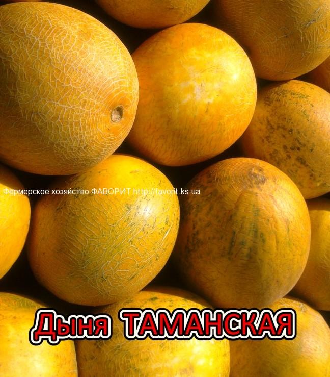 tamanskaya