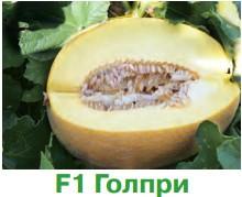 dinya_golpri_F1
